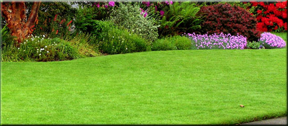 Midland and Area Lawn Care and Property Maintenance